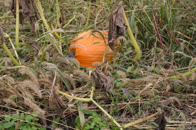101213_pumpkin