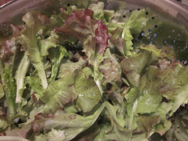 lettuce_0531