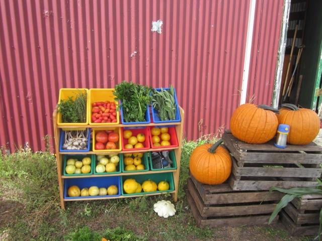 Farm Market, Day 1