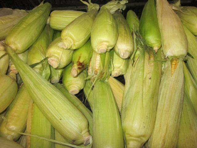 Open Season on Corn