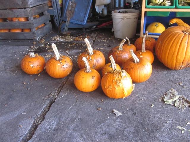 Pumpkin Carnage