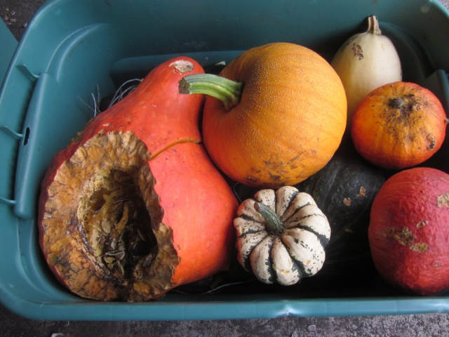 Mixed Winter Squashes
