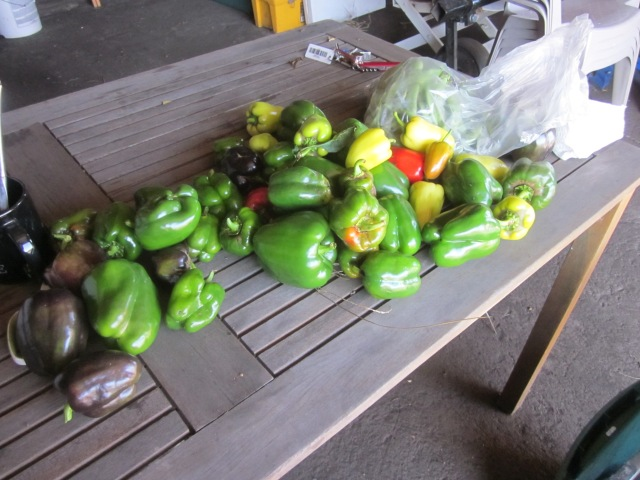 Peppers, round 2
